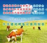 批发优质牧草种子黑麦草菊苣紫花苜蓿沙打旺 养牛羊猪鸡鸭牧草;