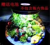 微景觀造景玻璃瓶 多肉苔蘚微景觀 可帶燈植物生態花瓶 創意禮品;