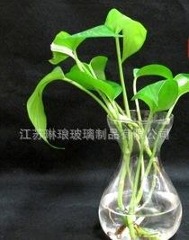 批发订制风信子水培玻璃花瓶绿萝水仙玻璃瓶新款水中花玻璃瓶;