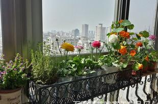 Европейский железные перила балкона оптовой цветок цветы висит перила умывальник, расширить и укрепить балкон висит горшки